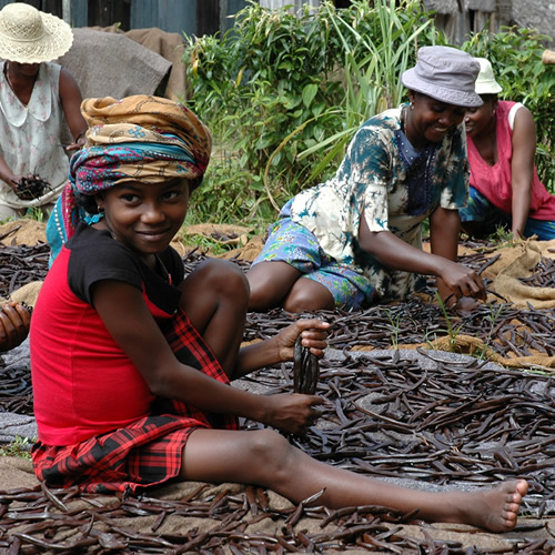 Fairtrade & Organic Vanilla Growers